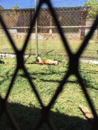 Jungla de Panama Wildlife Refuge : photo3.jpg