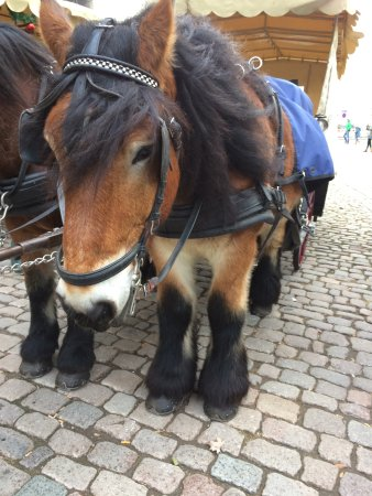 Old Market Square (Altmarkt): Лошадь из сказки