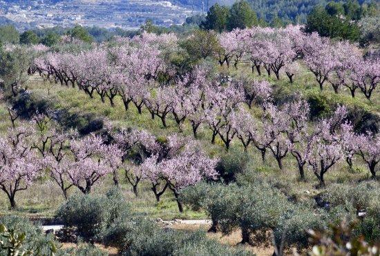 Parcent, Spagna: photo4.jpg