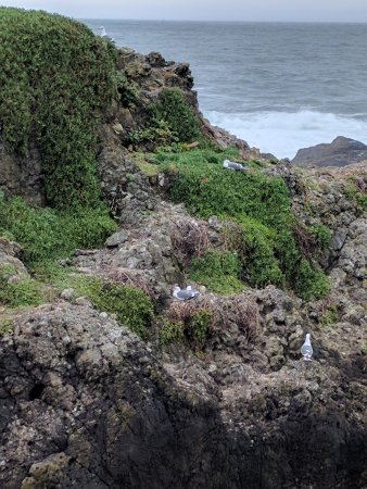 The Sea Ranch, CA: Nesting birds within 5 minutes walk from the lodge