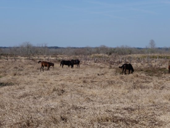 Paynes Prairie: photo0.jpg