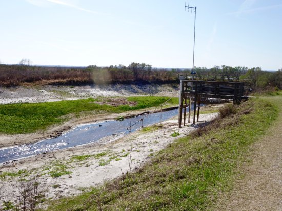 Paynes Prairie: photo2.jpg