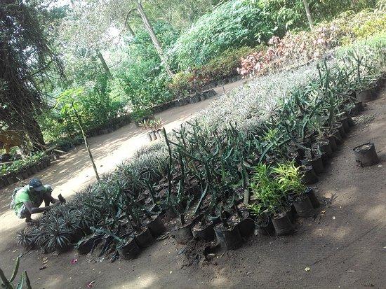 Jardin botanique de bingerville abidjan cote d 39 ivoire for Bingerville jardin botanique