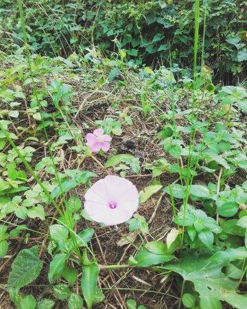 Les richesses de chez nous picture of jardin botanique for Camping jardin botanique