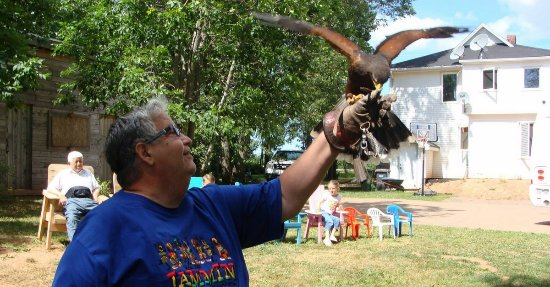 "Stratford, Canadá: ""Fun with Falcons"" experience"