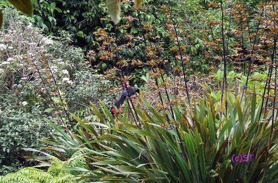 New Plymouth, Nueva Zelanda: Bird and flowers