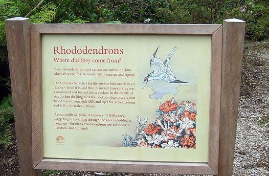 New Plymouth, Nya Zeeland: Rhondodendron info