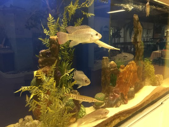 Calusa Nature Center and Planetarium : Fish tank inside museum
