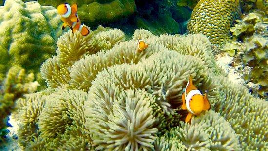 Sea Pearl Divers