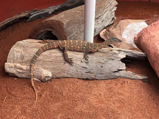 Armadale, Australia: photo5.jpg