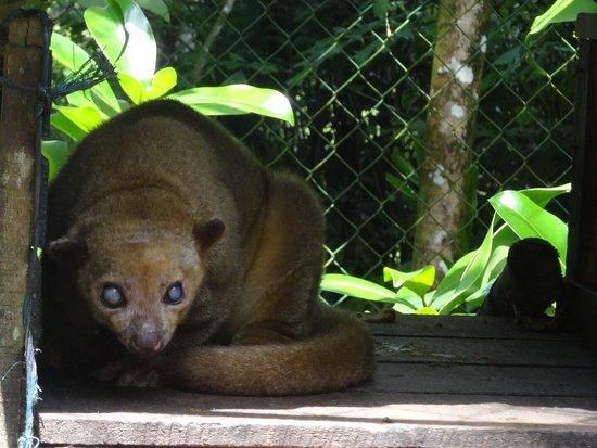 Tree of Life Wildlife Rescue Center and Botanical Gardens: photo2.jpg