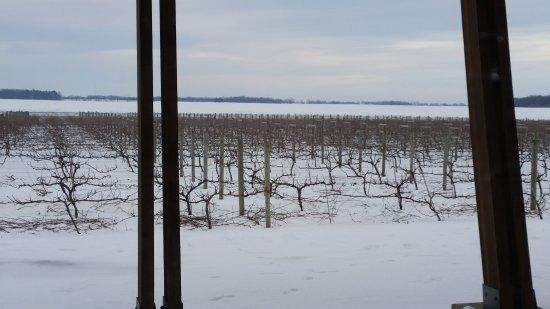 Spring Valley, MN: Vineyard