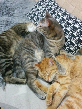 Subiaco, Australia: Pumbaa (orange cat) and Jelly (grey) are besties
