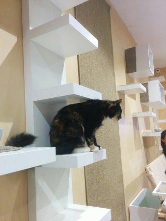 Subiaco, Australia: Cat Cafe Purrth
