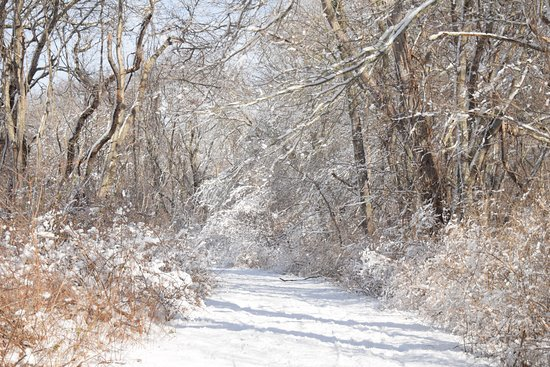 Ninigret National Wildlife Refuge and Kettle Pond Visitors Center : Beautiful in the snow