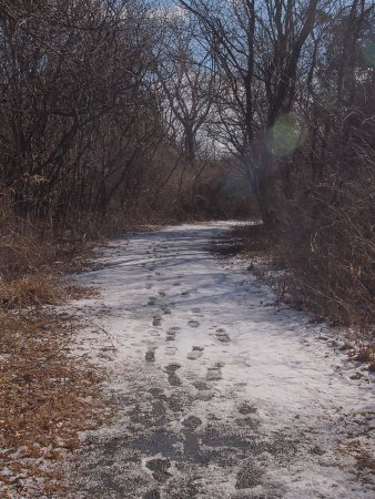 Ninigret National Wildlife Refuge and Kettle Pond Visitors Center : Path in winter