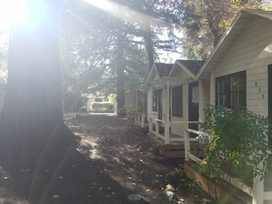 Guerneville, Californie : Morning sunlight between the Redwood Cabins