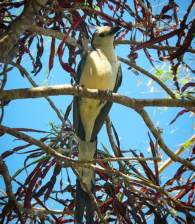Hotel Paraiso del Cocodrilo: There were 3 of these beautiful birds in a tree while we breakfasted!
