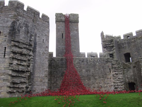 Caernarfon, UK: Castle wall with Remembrance day poppies.