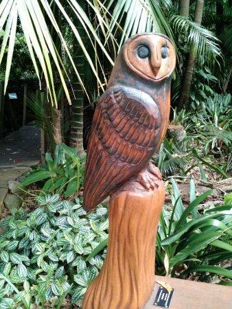 Tamborine Mountain, Australia: Sooty owl's creekside trail