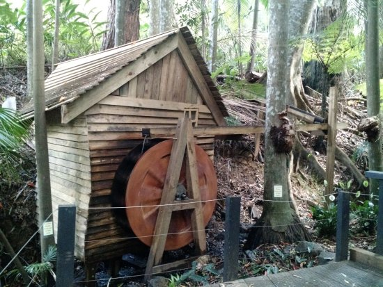 Tamborine Mountain, Avustralya: Sooty owl's creekside trail
