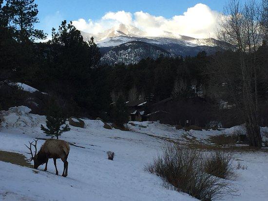 Black Canyon Inn: Around the pond area