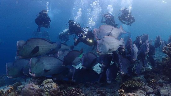 Seaventures Dive Rig: photo2.jpg