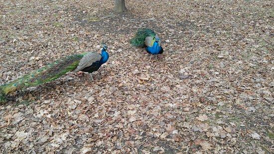 Pezinok, Slovakien: Zamocky park