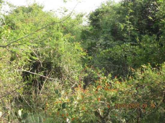Chinnar Wildlife Sanctuary: It's elephant unclose, 20-30 meters, had to run post the click