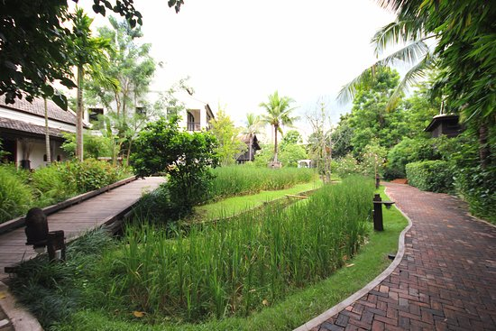 Saraphi, Ταϊλάνδη: Jardin et rizières, situés juste à l'arrière des villas sur pilotis...