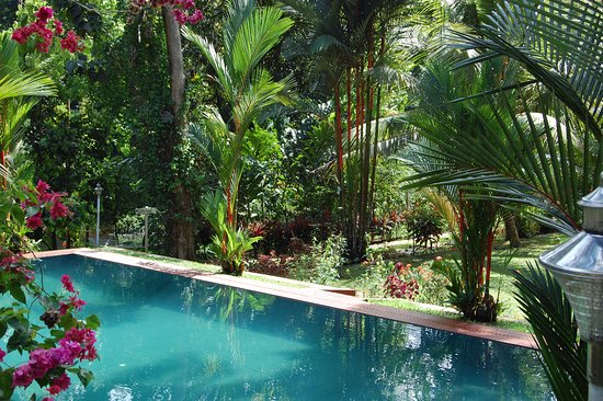 Karimannoor, India: pool and gardens