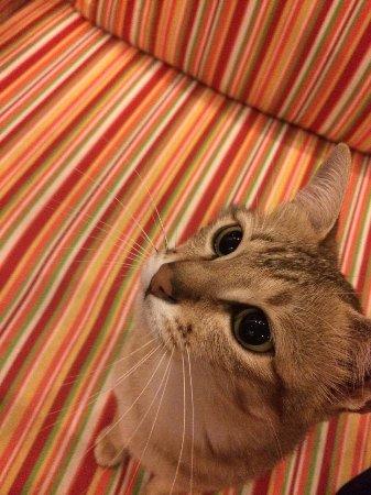 Siem Reap Rooms Guesthouse: Princess cat <3