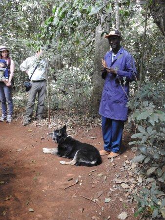 Limuru, Kenya: Führung durch den Wald