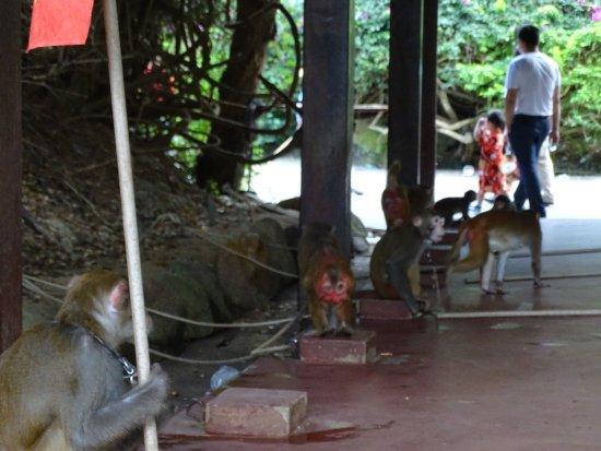 Lingshui County, Cina: встречающие обезьянки