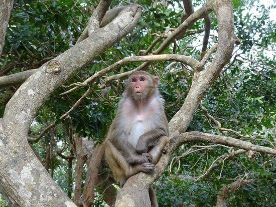 Lingshui County, Cina: Дикая обезьянка!!! (единственная, которую увидели)