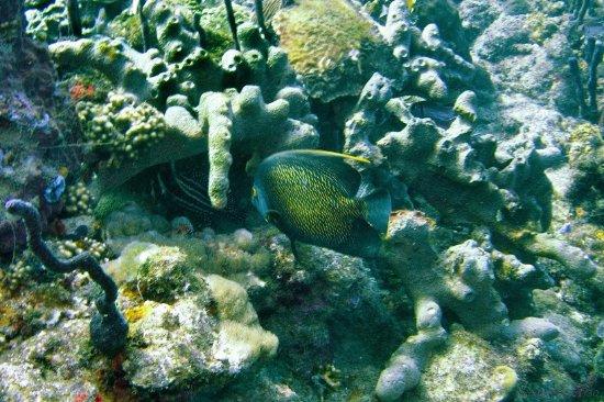 Plongee Bord de Mer: ange