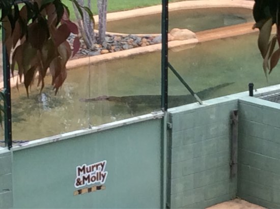 Foto De Australia Zoo Beerwah Saltwater Crocodiles Graham Bindi
