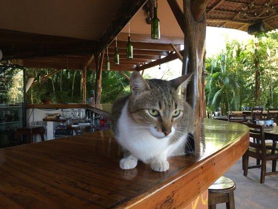 Playa Junquillal, Costa Rica: photo9.jpg