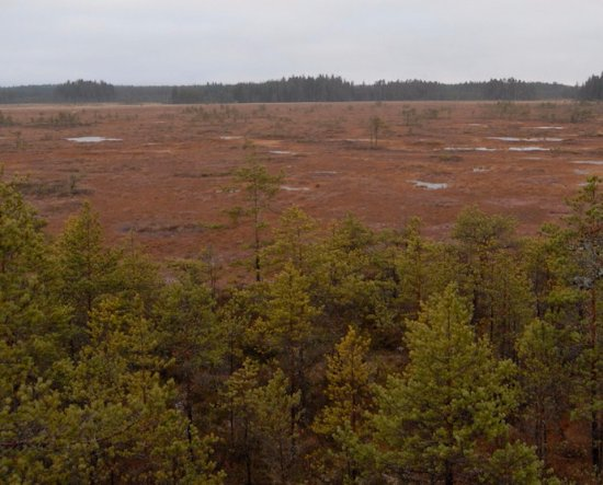 Siltakyla, Finnland: Some of the bog area