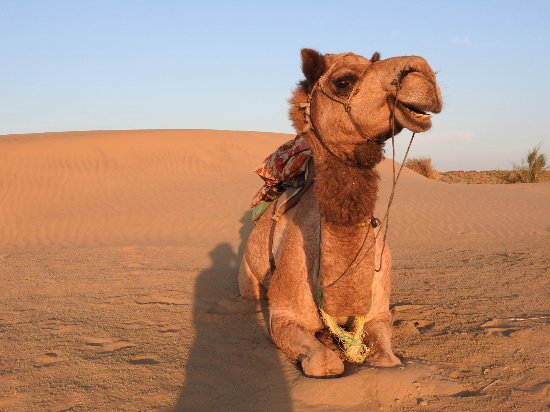 Shiva Camel Safari