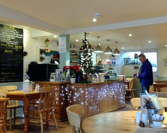 Dog Friendly Hotels In Appledore