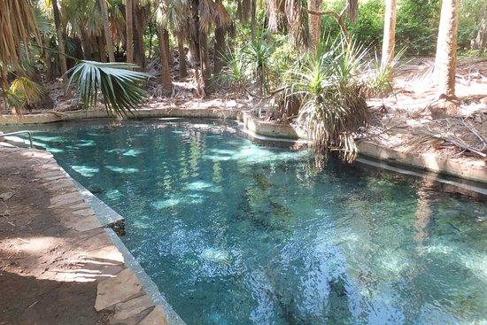 Mataranka, Australia: Pool