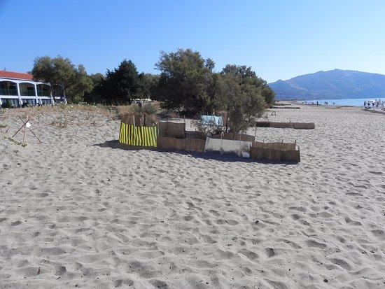 Louis Zante Beach Hotel: Links Bungalow, dann Strand (wo die Schildkröten schlüpfen), dann Meer