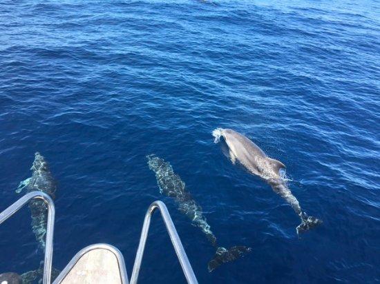 Playa de Aucanada: Excursiones  en Velero - Delfines