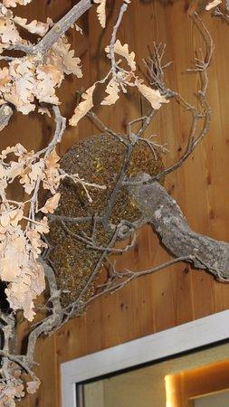 Rousset, France: Reproduction d'un essaim sur un arbre