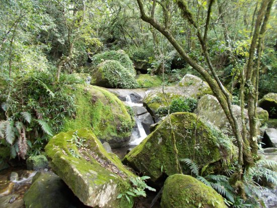 uKhahlamba-Drakensberg Park, Güney Afrika: Rain Forest