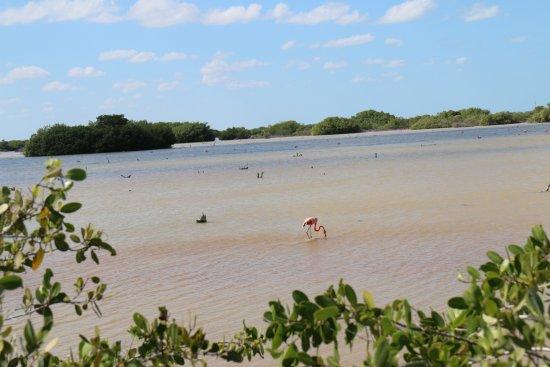 Yucatan, Mexico: Laguna Rosada/Des flamans, sur le petit chemin qui mène à Xcambo