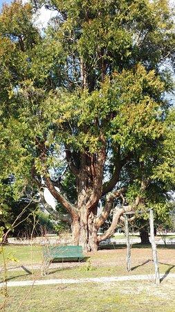 Richelieu, Francia: Arbre du parc