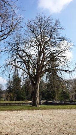 Richelieu, Fransa: Arbre du parc avec le tronc qui tourne