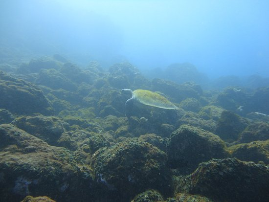 Santiago del Teide, สเปน: une très grzcieuse tortue de mer que nous avons pu voir pendant de longues minutes